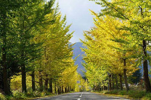 Kannabe Highlands