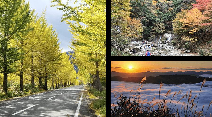Fall Autumn in Kannabe