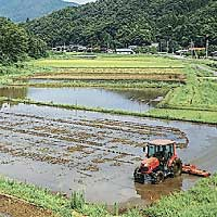 Tanto Countryside rice fields