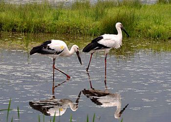 Toyooka - Homeland of the Oriental White Stork
