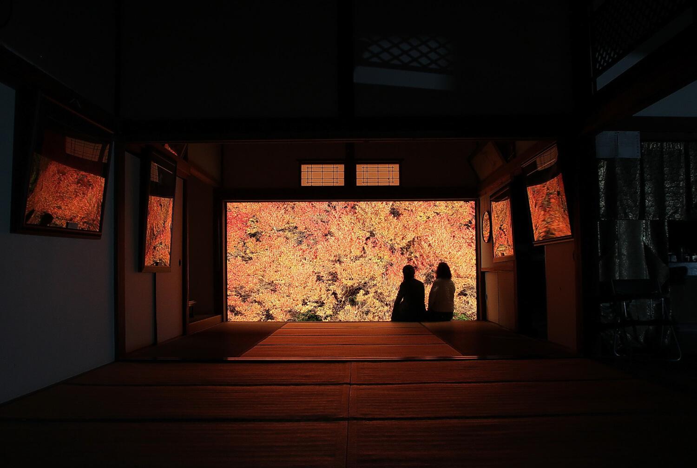 Dodan-Tsutsuji (mid-November)