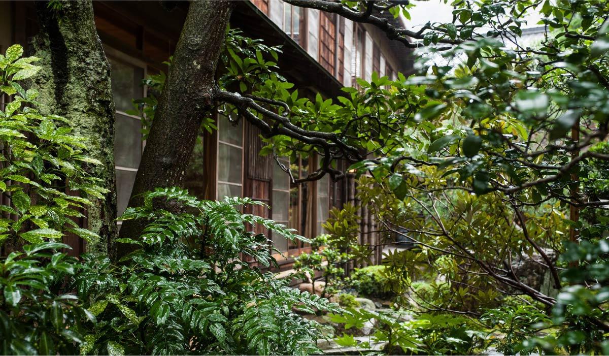 A shot of the dense shrubbery of Nishimura Honkan's Japanese garden