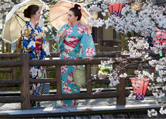 Two foreign woman dressed in colorful Yukata hold umbrellas while standing on a stone bridge, surrounded by blooming sakura cherry blossoms